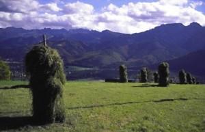 Suszenie siana w Tatrach na osterwkach. Źródło: www.bank-zdjec.com