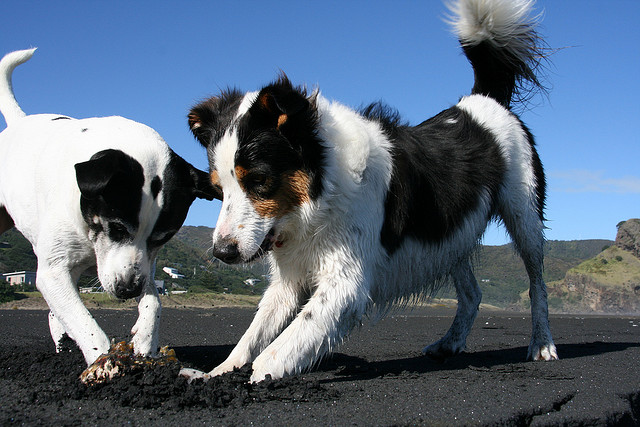 Pozwól psu być psem!