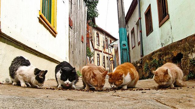 640px-Street_cats_(1)