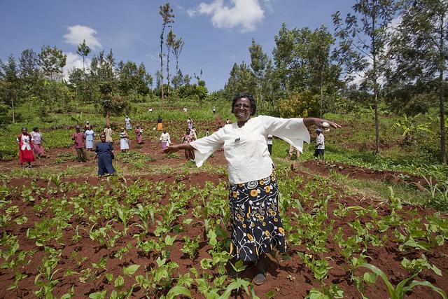 Jane Wainaina jest liderką organizacji rolniczej w Kenii. Namówiła swoich współpracowników do powrotu do upraw manioku. Maniok to roślina, która dobrze znosi trudne warunki uprawy. Jest bardzo mało wymagająca, szczególnie jeśli chodzi o wodę. Zdj. Gates Foundation,  CC BY-NC-ND 2.0