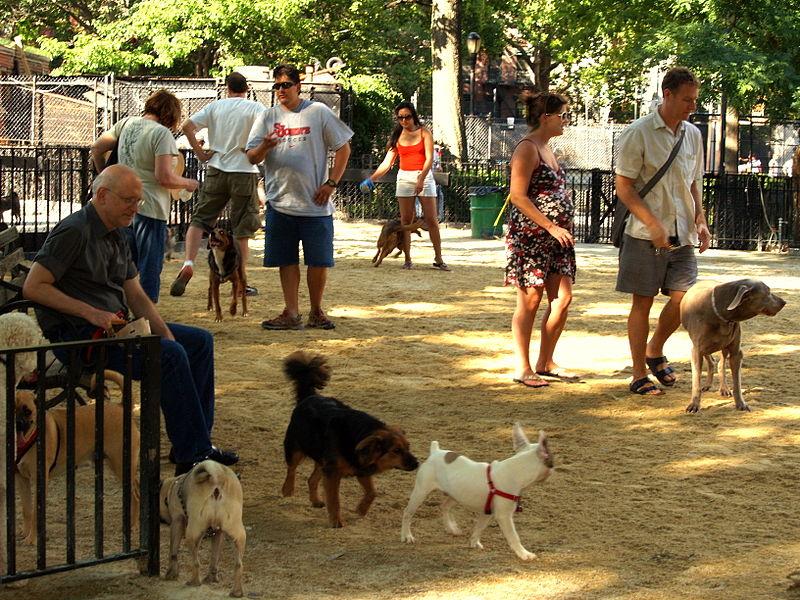 Nowojorski park Tompkins Square ma specjalną przestrzeń, wygospodarowaną dla psów. Fot, David Shankbone, CC BY-SA 3.0, źródło wikipedia.org
