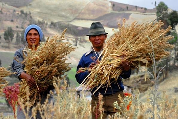 Certyfikowani producenci komosy ryżowej z Ekwadoru. Aut. Dider Gentilhomme. Źródło Wikipedia. CC-BY-2.5