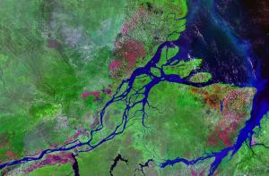 Delta Amazonki widziana z góry. Źródło Wikimedia. Domena publiczna