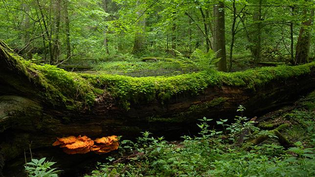 Białowieski Park Narodowy, fot. Frank Vassen, CC BY 2.0, kadr z oryginału