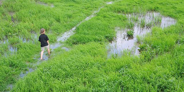 Spacer przez podmokłą łąkę w Narwiańskim Parku Narodowym, fot. Agnieszka Gaszyńska, kadr z oryginału