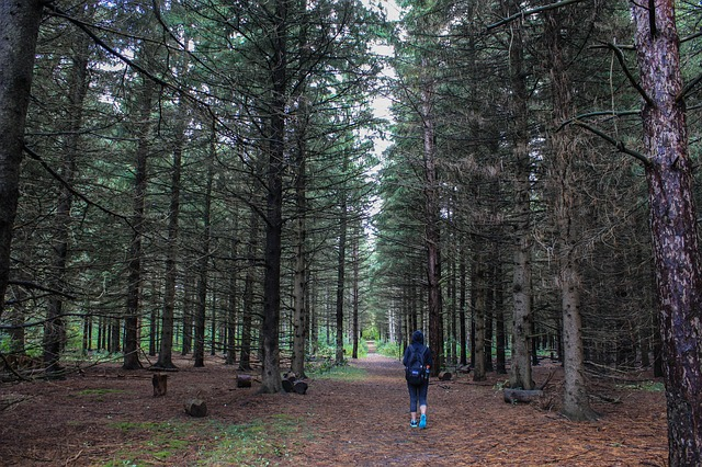 Nawet krótki spacer po lesie przynosi poprawę nastroju. Źródło Pinterest. CC0 Public domain