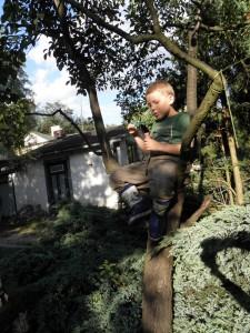 na drzewie