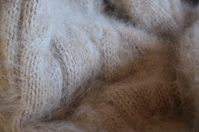 Pozyskiwanie wełny z królików typu angora wiąże się z ich okrutnym traktowaniem. Źródło Pixabay