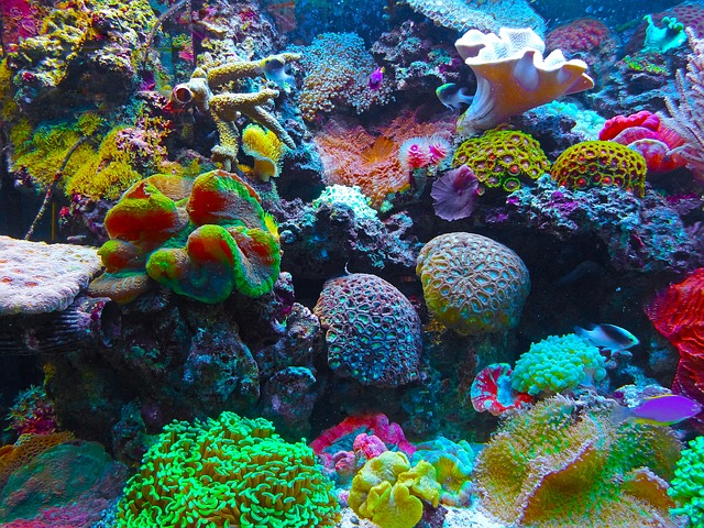 Rafom koralowym zagrażają zanieczyszczenie i ocieplenie wód, zlewy ścieków hotelowych, zmiany linii brzegowej czy likwidowanie namorzynowych lasów. Aut. Jan Mallander. Źródło Pixabay. CC0