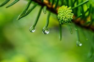 Drzewa to niezastąpione naturalne klimatyzatory i nawilżacze powietrza. Zdj. frolicsomepl, CC0 Public Domain