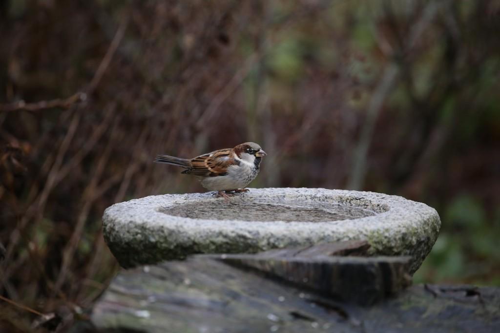 bird-585010_1280