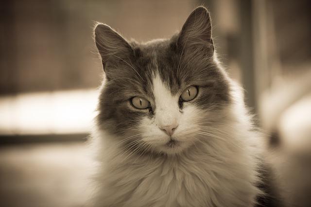 Być może kot i pies to pierwsze zwierzęta, jakie przyjdą Ci na myśl, jednak królestwo zwierząt obejmuje wiele milionów innych gatunków. Alexis, CC0