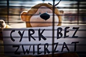 cyrk2