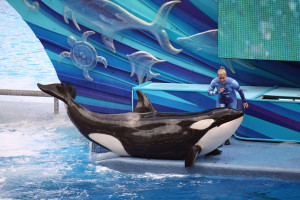 Rich Jacques One Ocean Orka Pokaż Stadion Shamu, Sea World, Orlando, Floryda