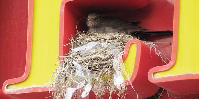 dzień-ptaków-3