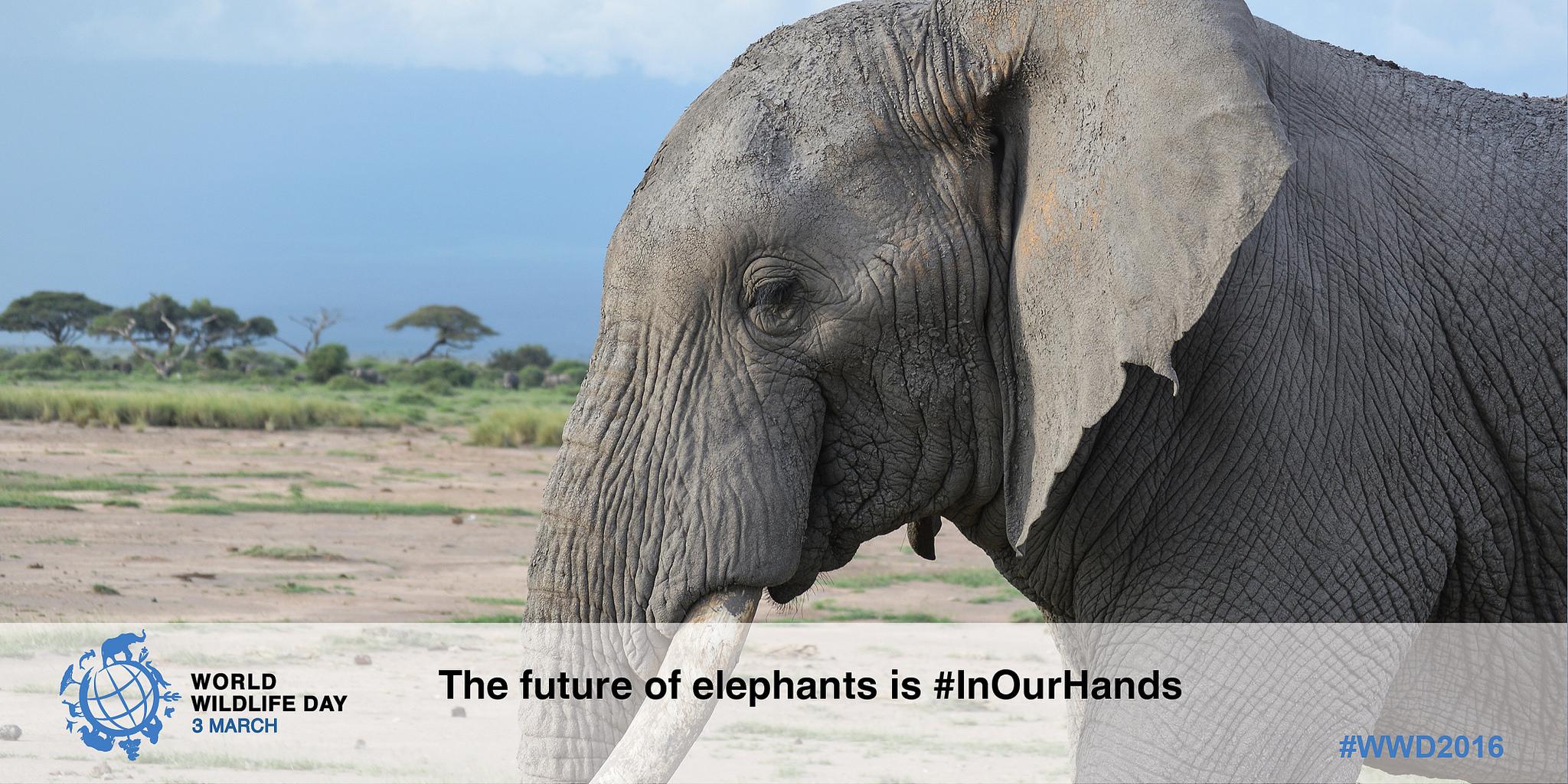 dzien-dzikiej-przydrody-slon