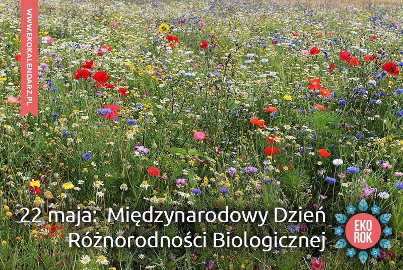 dzien-roznorodnosci-biologicznej