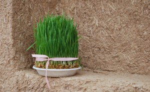grass-532563_960_720