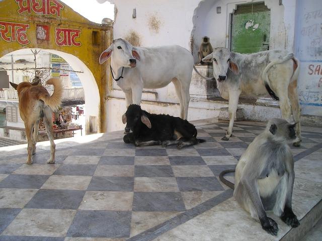 india-361_640