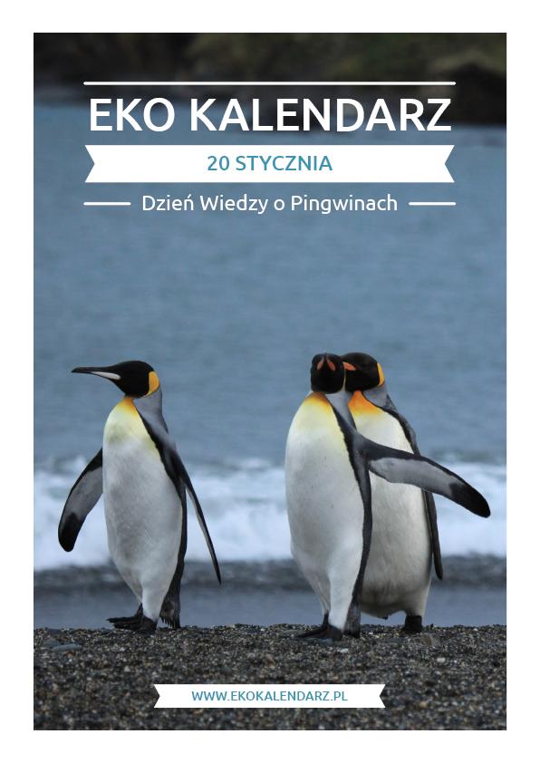 pakiet - 01-20 - Dzień Wiedzy o Pingwinach
