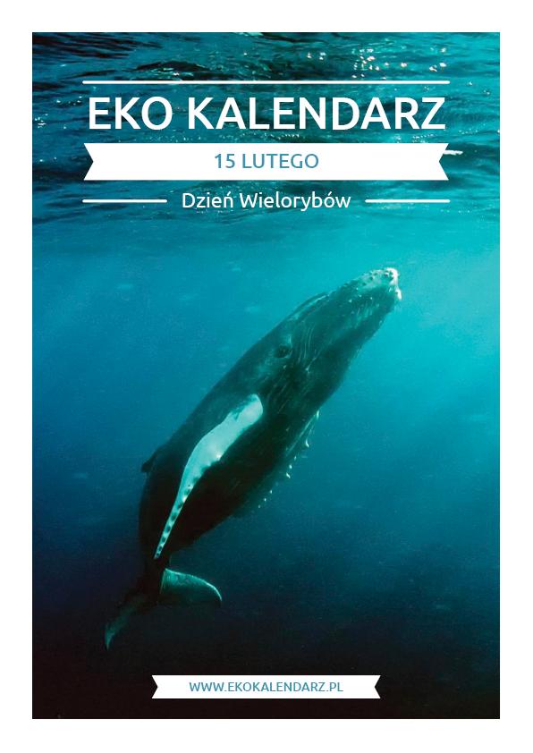 9b4c1fdc52cfcf Dzień Wielorybów – pakiet edukacyjny | EKO Kalendarz