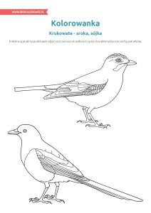 pakiet - 04-01 - Dzień Ptaków18