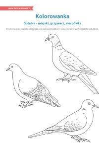 pakiet - 04-01 - Dzień Ptaków15