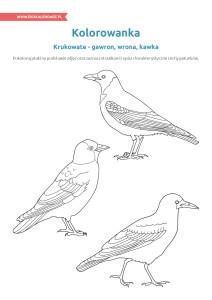 pakiet - 04-01 - Dzień Ptaków17