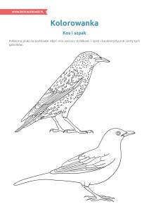 pakiet - 04-01 - Dzień Ptaków19
