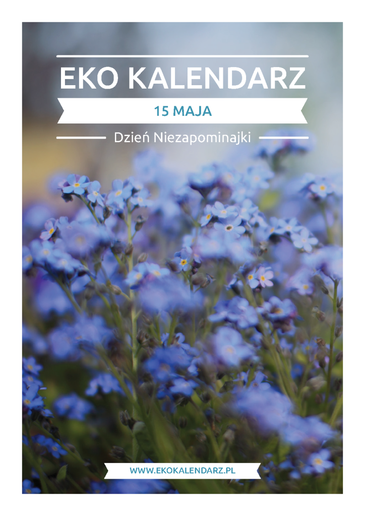 Dzień Polskiej Niezapominajki Eko Kalendarz