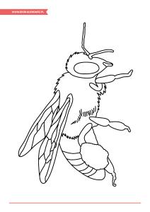 pakiet-08-08-Dzień-Pszczół_Strona_13