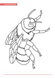 pakiet-08-08-Dzień-Pszczół_Strona_15
