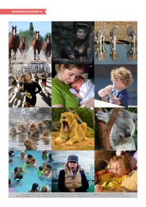 pakiet - 10-04 - Światowy Dzień Zwierząt15