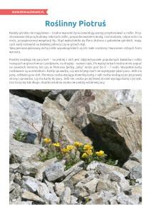 pakiet - 12-11 - Międzynarodowy Dzień Terenów Górskich14