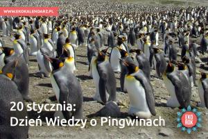 pingwin1