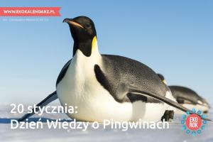 pingwin4