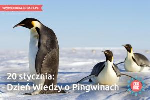 pingwin6