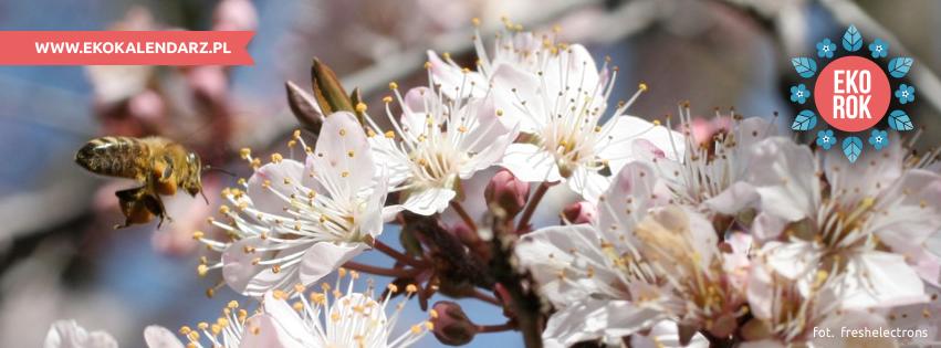 pszczoła1(1)