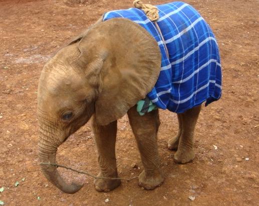 3-miesięczny słonik