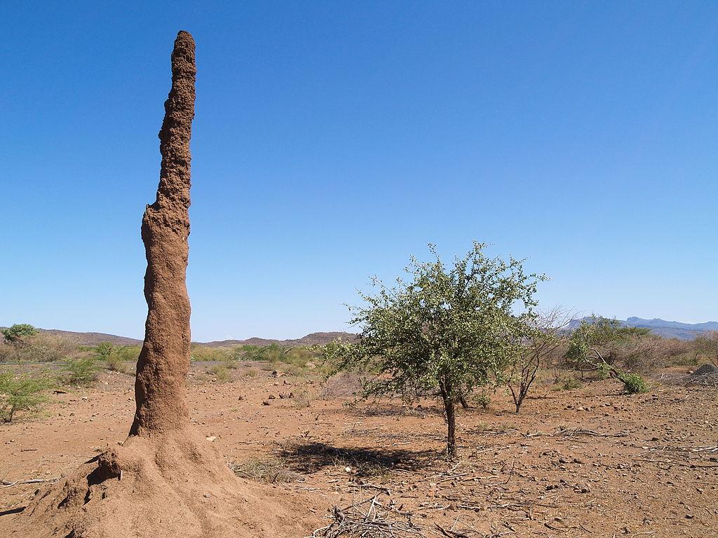 termit-kenia